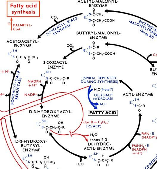 biochem_chart