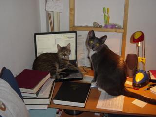 badcats.jpg