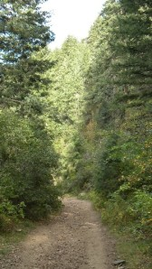 A forested path